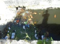 More garbage in the canal at Graeme Hall wetland and Ramsar site