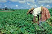 Barbados needs to protect local food production