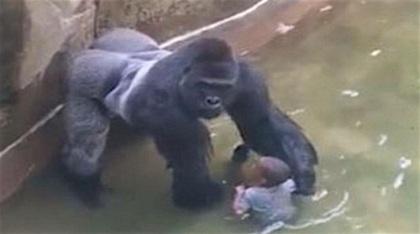 e_hutchinson_gorilla_cincinnati_black